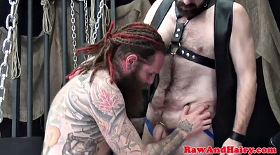 Bear, Bears, Bear gay, Mature hairy anal, Mature anal sex, Hairy gay