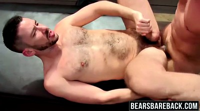Bears, Gay bear, Bear gay
