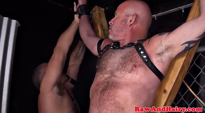 Bear, Gay bear, Gay bondage, Big bear, Ass lick