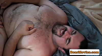 Bear, Hairy mature