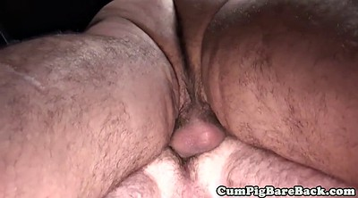 Bear gay, Gay bear, Bareback, Mature gay