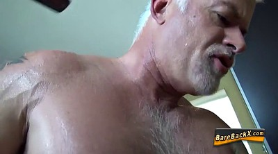 Bears, Bear, Mature hd