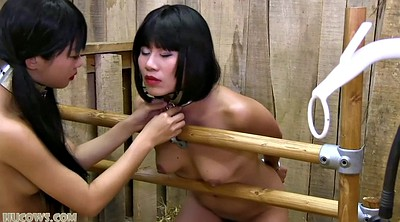 Milk, Japanese bdsm, Japanese milk, Japanese bondage, Asian milk, Asian bdsm