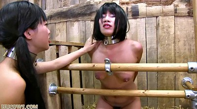 Japanese bdsm, Milk, Japanese bondage, Japanese milk, Asian bondage, Asian bdsm