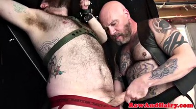 Gay mature, Mature bondage, Chubby gay, Mature group sex, Gay chubby, Bear gay