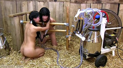 Milking, Japanese milk, Japanese bdsm, Asian bondage, Japanese bondage, Asian milk